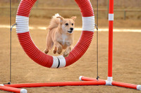 Agile Canines CPE Trial at Lindstrom October 3-4 2015