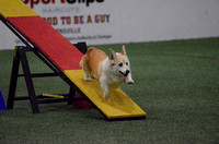 Agile Canines CPE Trial at Soccer Blast June 13-14 2015
